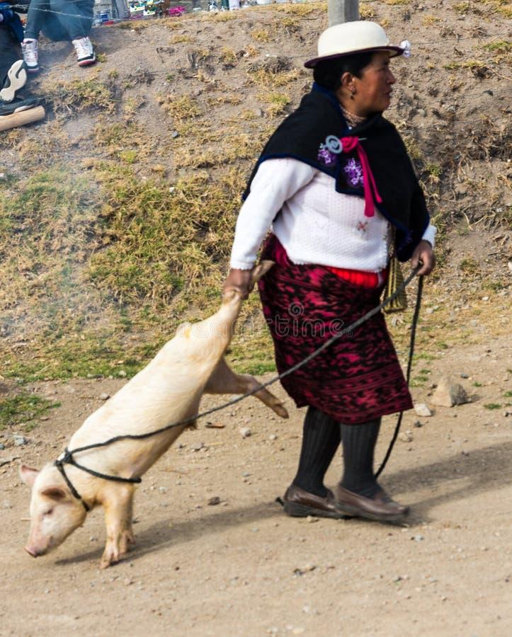 Canar Ekwador, Lipiec 12,/, 2015 - kobieta wlec świni właśnie pu fotografia royalty free