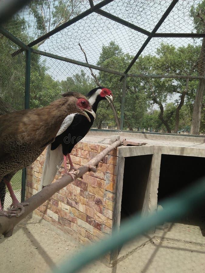 Canard d'oiseaux images stock