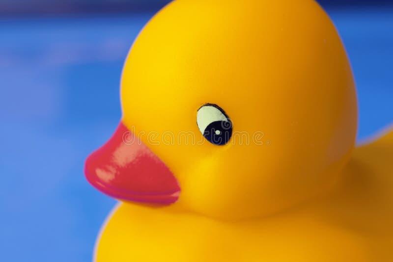 Canard de jouet photo stock