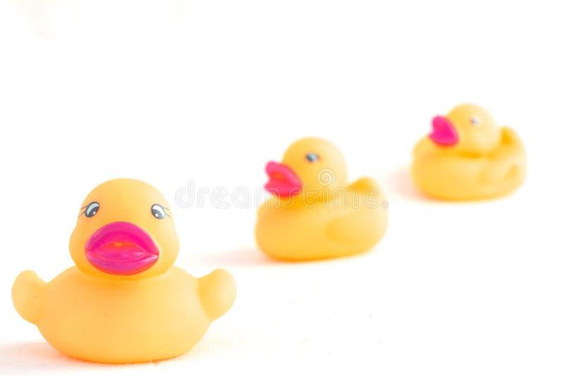 Canard en caoutchouc à l'arrière-plan blanc photos libres de droits