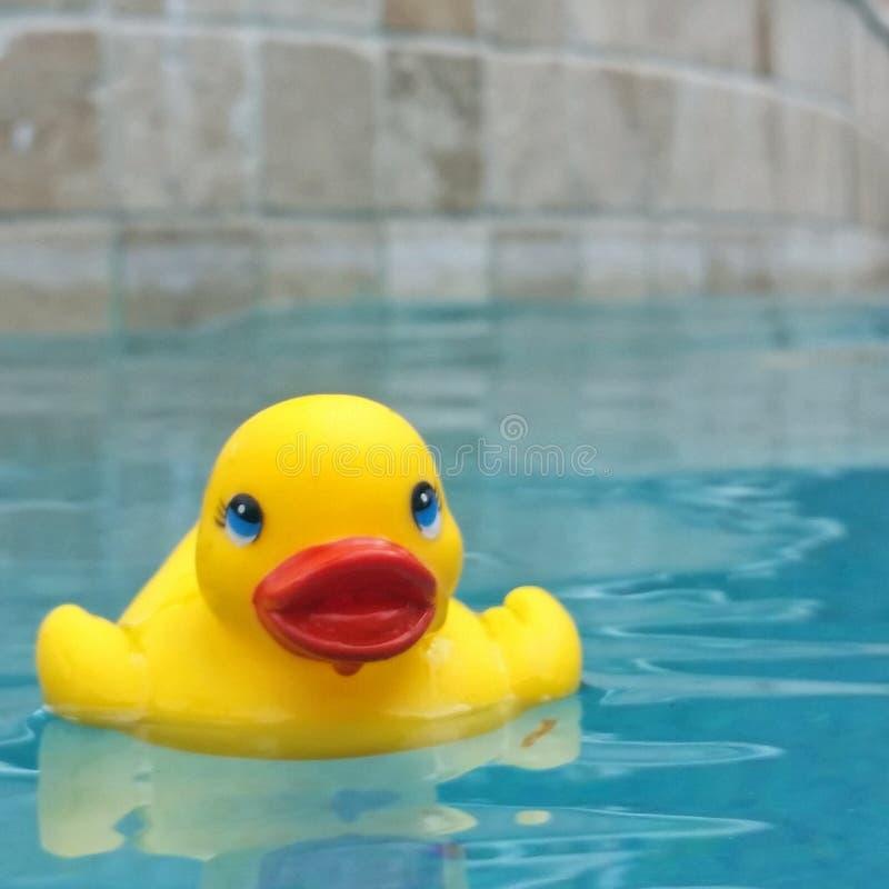 Canard en caoutchouc dans une piscine photo stock