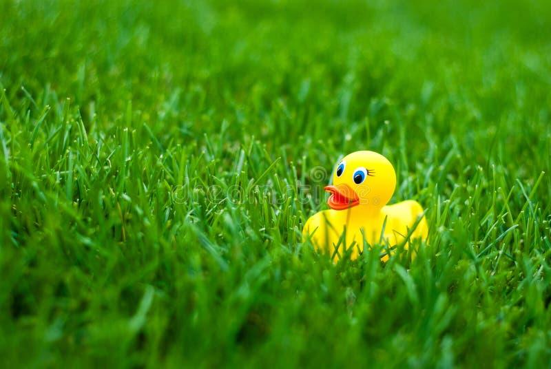 Canard en caoutchouc de jouet pour un bain parmi l'herbe verte photo stock