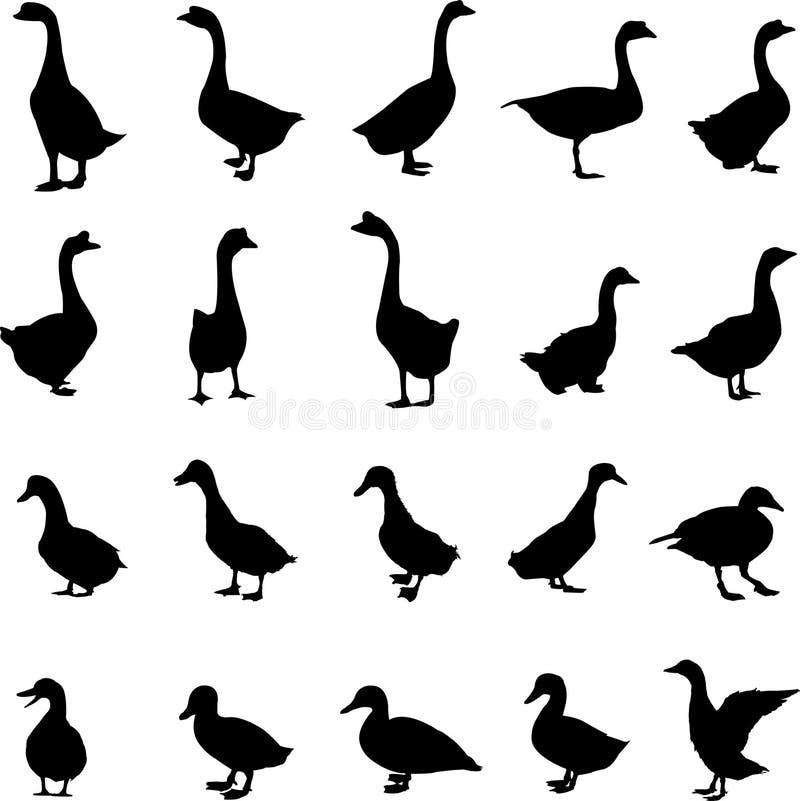 Canard et oie illustration de vecteur