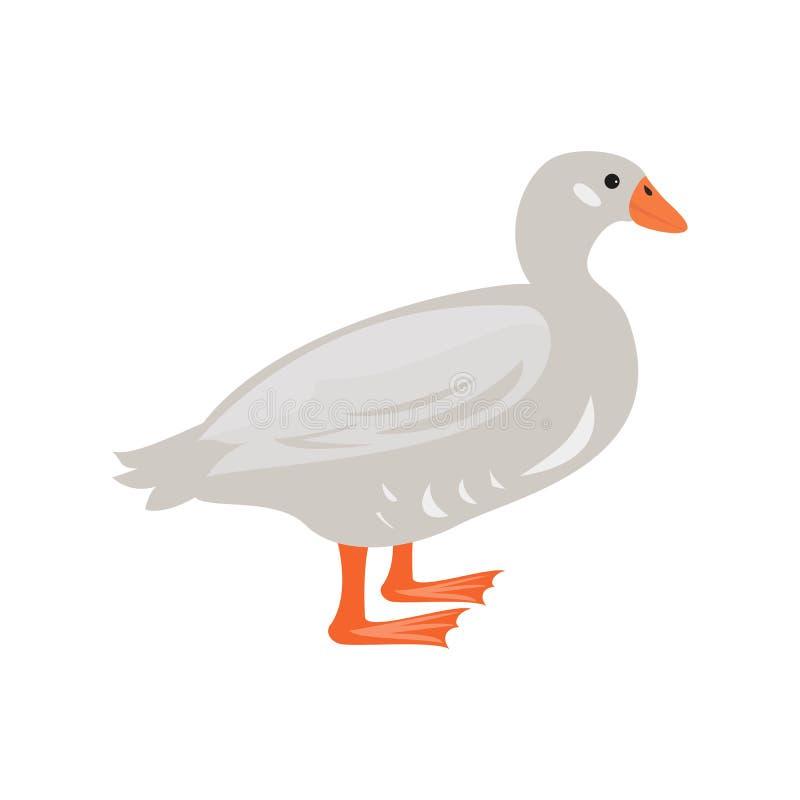 Canard mignon sur le fond blanc illustration libre de droits