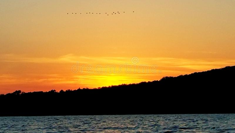 Canards dans une rangée photos libres de droits