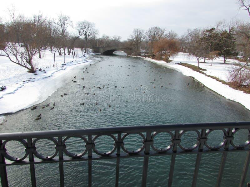 Canards de rivière images stock