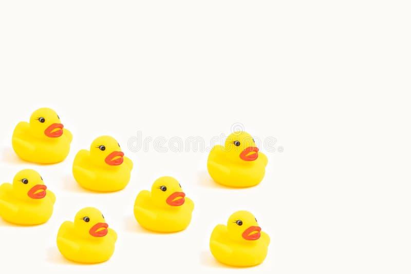 Canards en caoutchouc jaunes sur le fond blanc photographie stock libre de droits