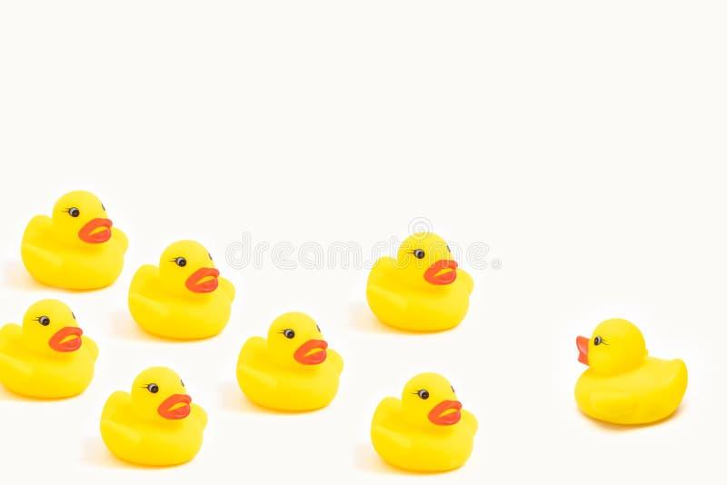 Canards en caoutchouc jaunes sur les blancs faisant face de retour photographie stock