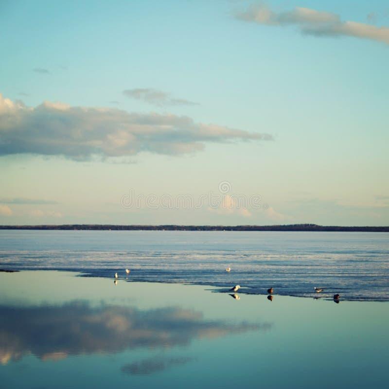 Canards et mouettes sur le lac Fonte de glace photographie stock libre de droits
