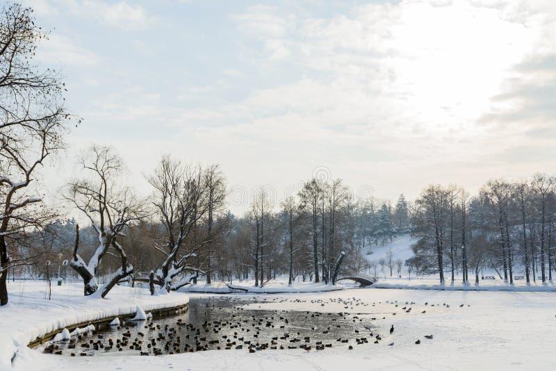 Canards et oiseaux de mouettes sur le lac congelé winter images stock