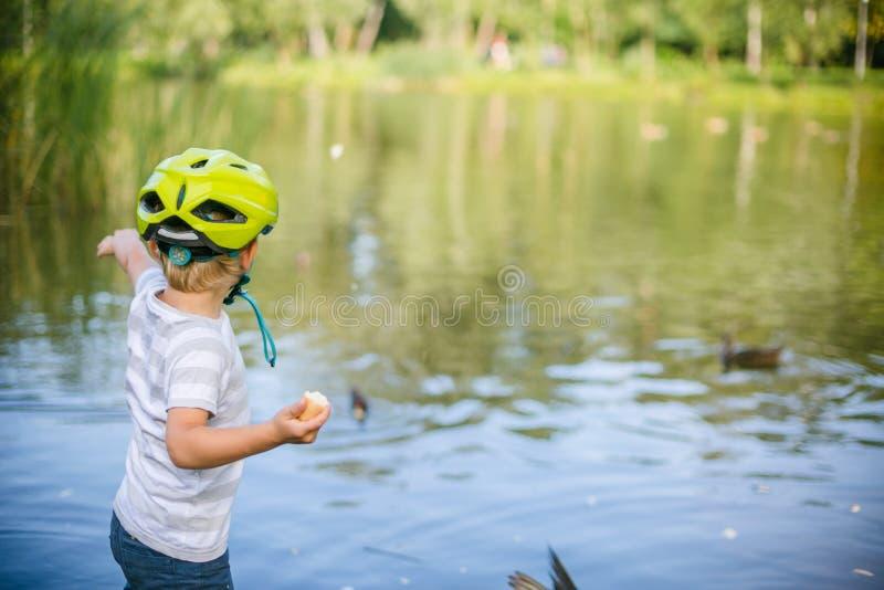 Canards et pigeons de alimentation de garçon en parc par le lac images stock