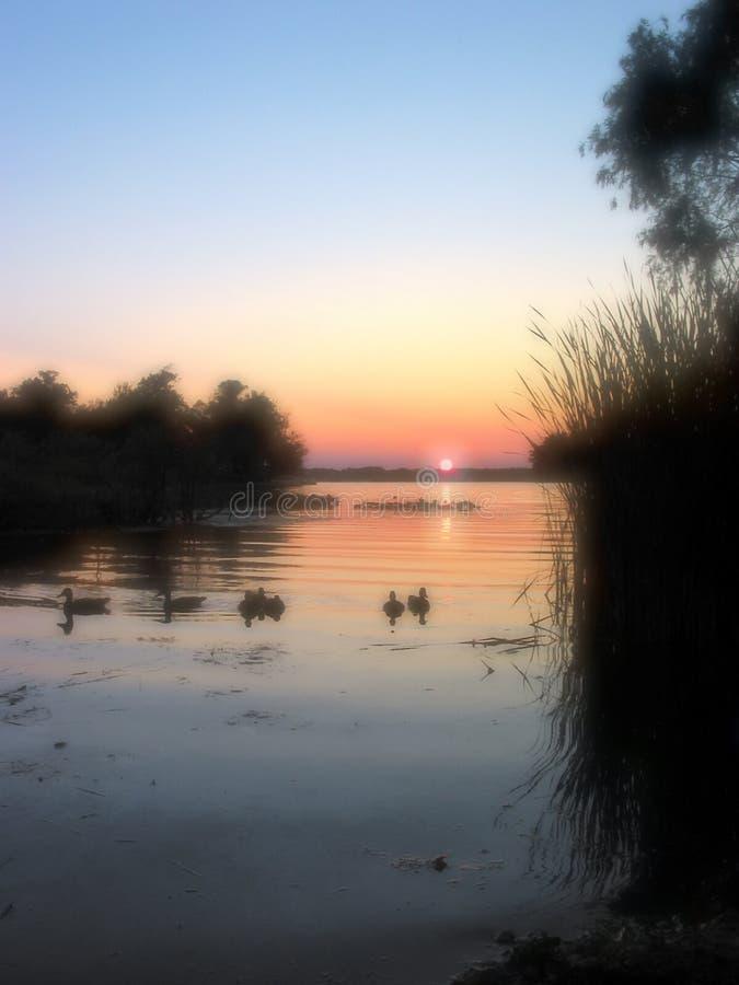 Canards observant le coucher du soleil - 1 images stock