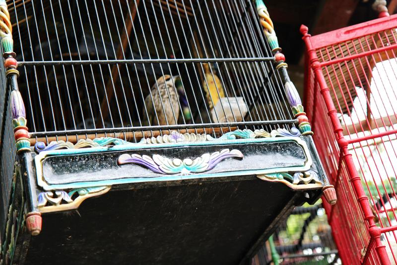 Canaries в клетке стоковое фото rf