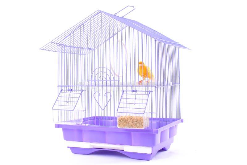 Canarino nella gabbia fotografia stock