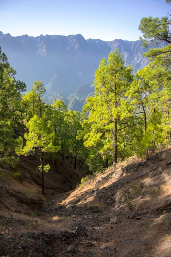 Canary Woodland Stock Images