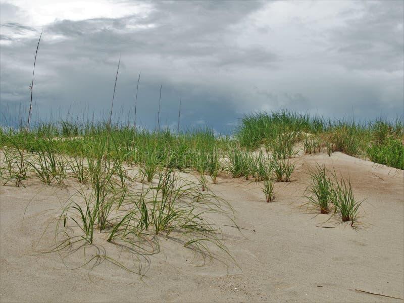Canaveral National Seashore. Dunes and sea grass along the beach at Canaveral National Seashore in Florida royalty free stock image