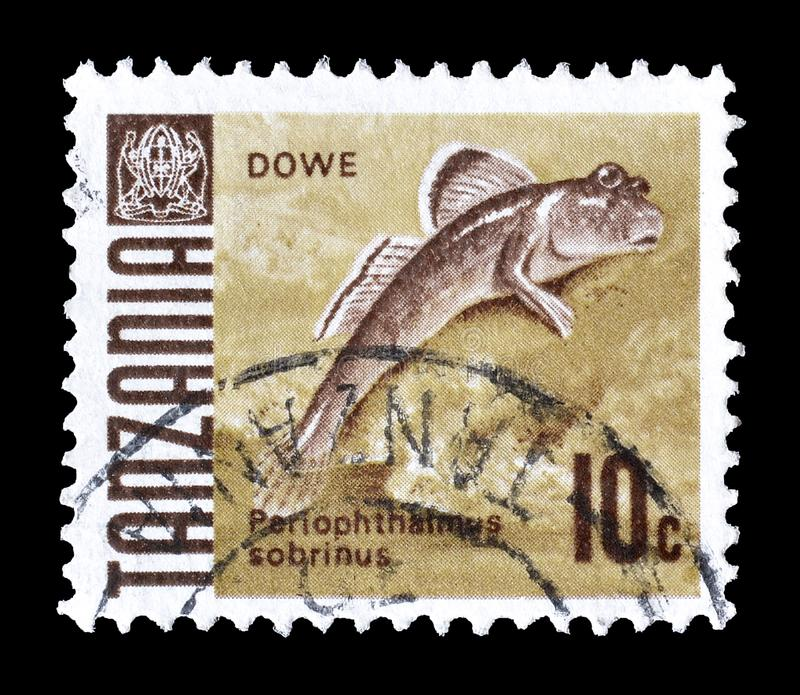 Tanzania on postage stamps. Cancelled postage stamp printed by Tanzania, that shows Mudskipper, circa 1967 stock photos