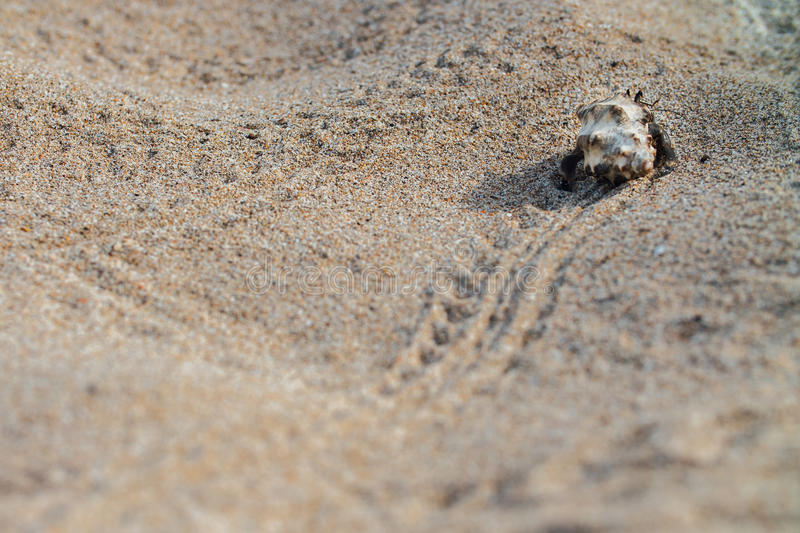 Cancer hermit crab Walks the sand. Macro. royalty free stock photography