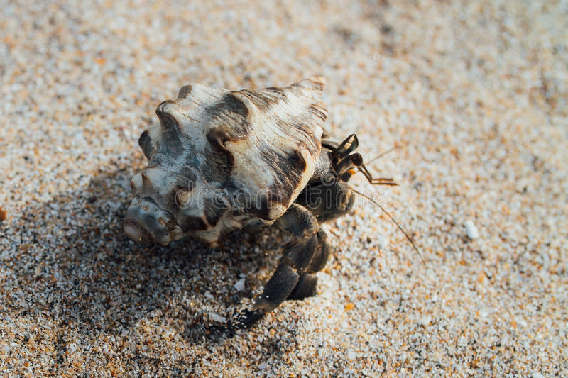 Cancer hermit crab Walks the sand. Macro. royalty free stock photos