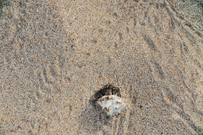 Cancer hermit crab Walks the sand. Macro. stock image