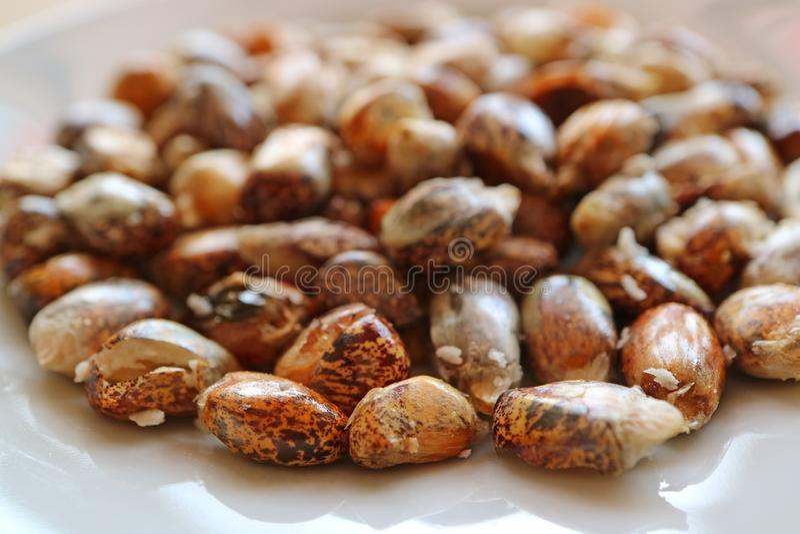 Cancha,安地斯山的敬酒的Chulpe玉米或Maiz Chulpe,秘鲁鲜美玉米快餐特写镜头  免版税库存照片