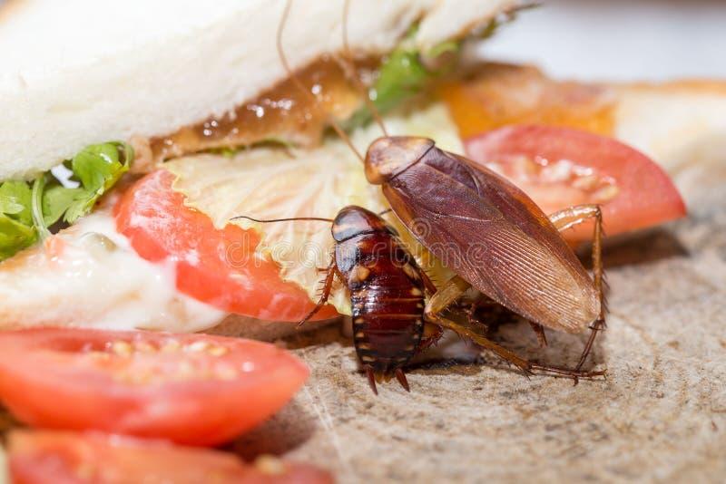 Cancrelat mort, le problème dans la maison en raison des cancrelats vivant dans la cuisine photographie stock