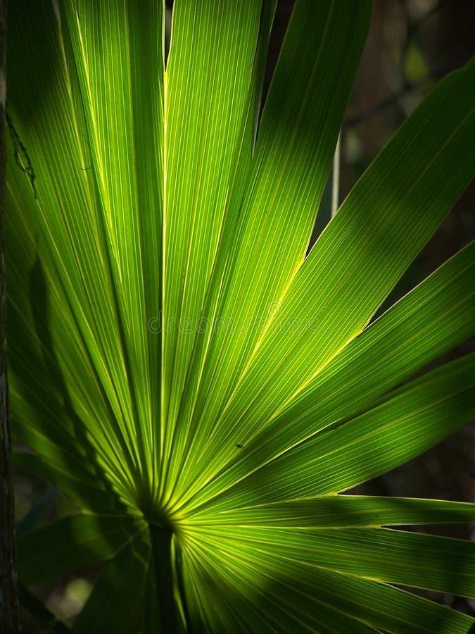 cancun liści, zdjęcie royalty free