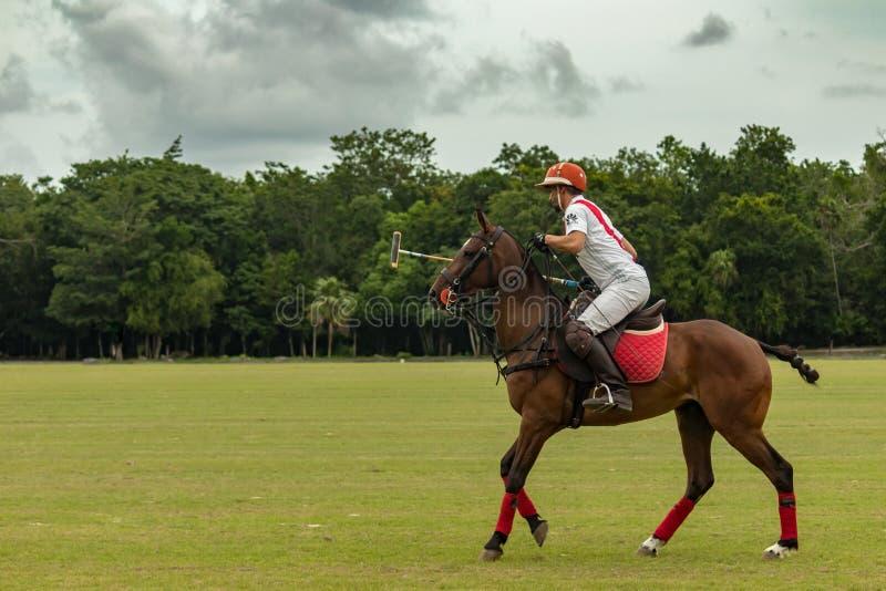 CANCUN MEKSYK, LIPIEC, - 8, 2018: Argentinean polo gracz na purebr zdjęcia stock