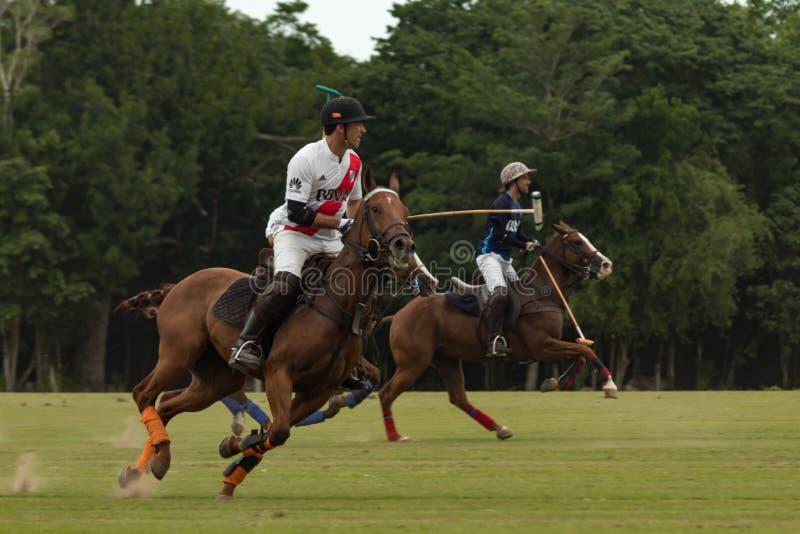 CANCUN MEKSYK, LIPIEC, - 8, 2018: Elita polo graczów un purebred ho zdjęcia royalty free