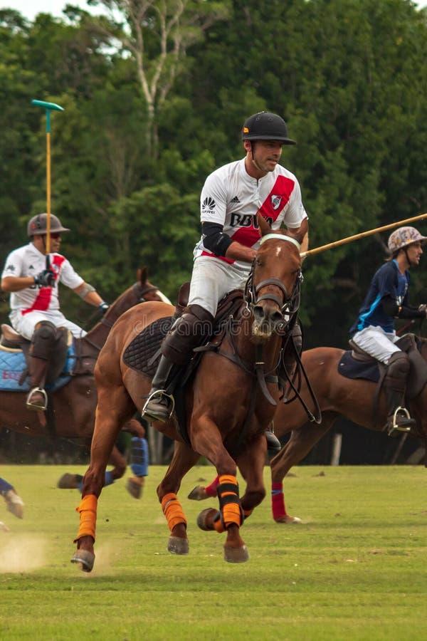 CANCUN, MEXIQUE - 8 JUILLET 2018 : Animal de race de l'ONU de joueurs de polo d'élite ho image libre de droits