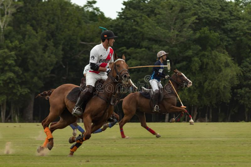 CANCUN, MEXIQUE - 8 JUILLET 2018 : Animal de race de l'ONU de joueurs de polo d'élite ho photos libres de droits