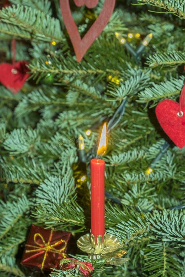 Candels ardientes de la Navidad en el árbol de navidad fotografía de archivo libre de regalías