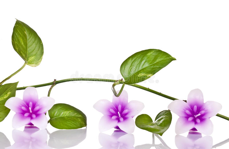 Candels et plante verte photo stock