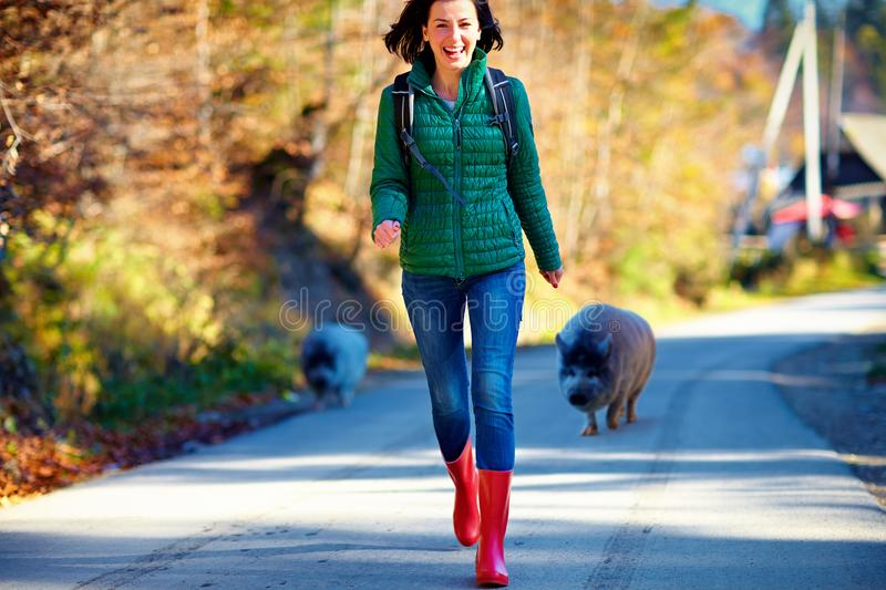 Candid funny moment of girl, tourist running away from very friendly pig on the road during the trip stock image