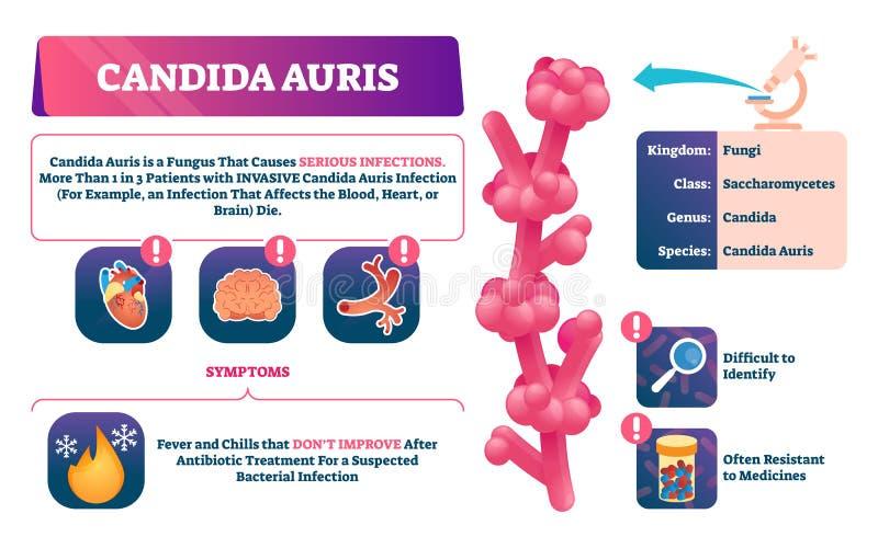 Candida auris wektoru ilustracja Biologiczny grzybowy infekcji wyjaśnienie royalty ilustracja