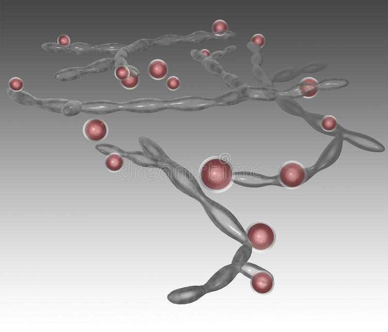 Candidaalbicans stock illustrationer