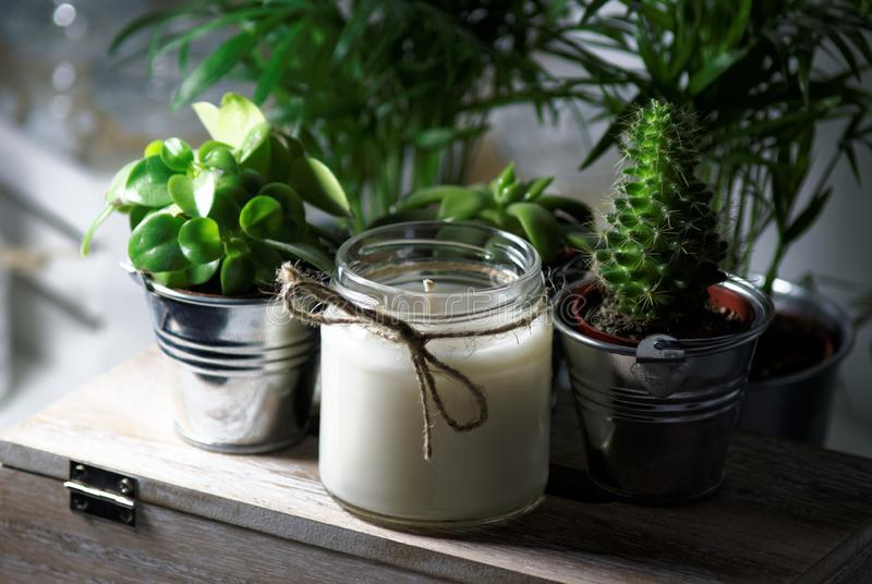 Candle between succulents stock photos