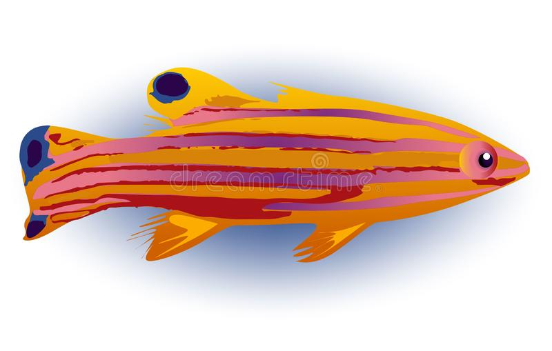 Candy Basslet fish, vector exotic water marine royalty free illustration