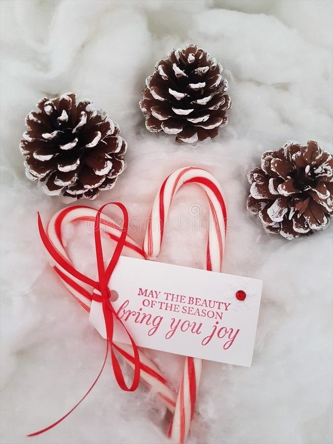 Candy canes with a Christmas wish and pine cones laying on a cotton cloud royalty free stock photography