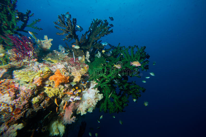 Candy store reef stock images