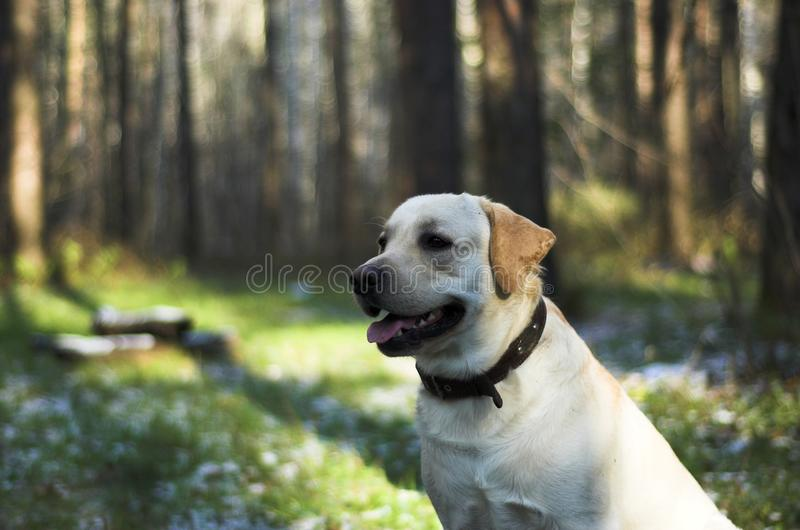 Cane fotografie stock libere da diritti