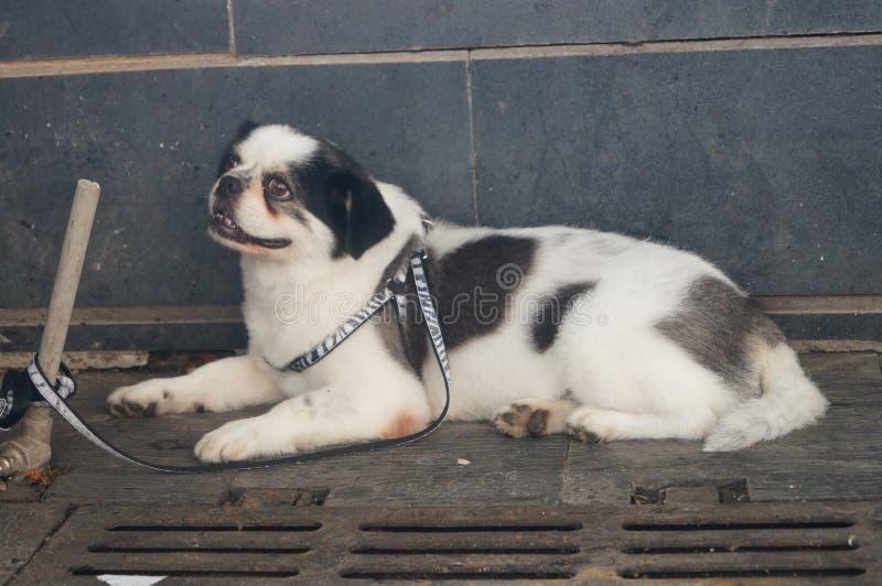 Download Cane immagine stock. Immagine di cani, animali, background - 55358697