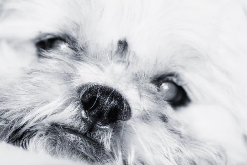 Cane adorabile fotografia stock