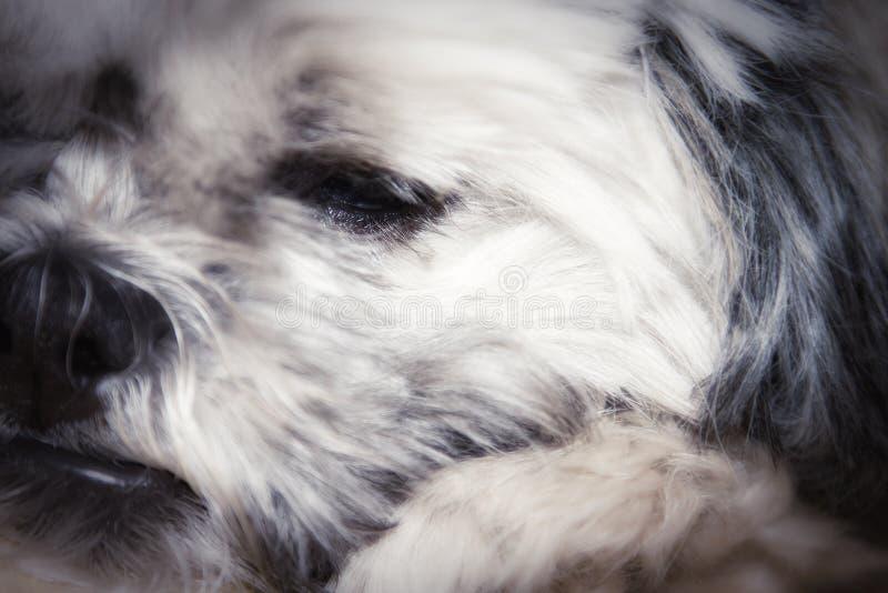 Cane adorabile fotografia stock libera da diritti
