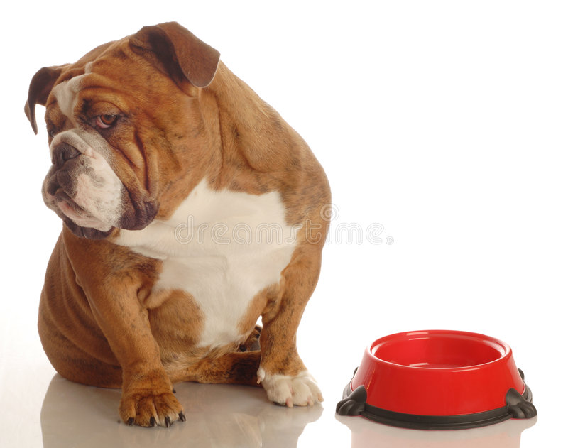 Cane affamato fotografia stock