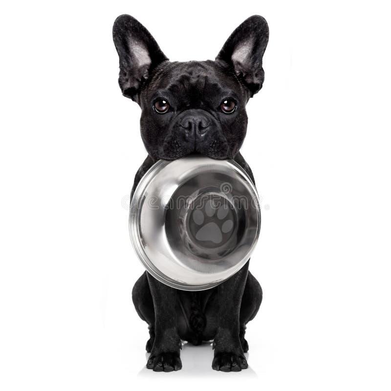 Cane affamato con la ciotola fotografie stock