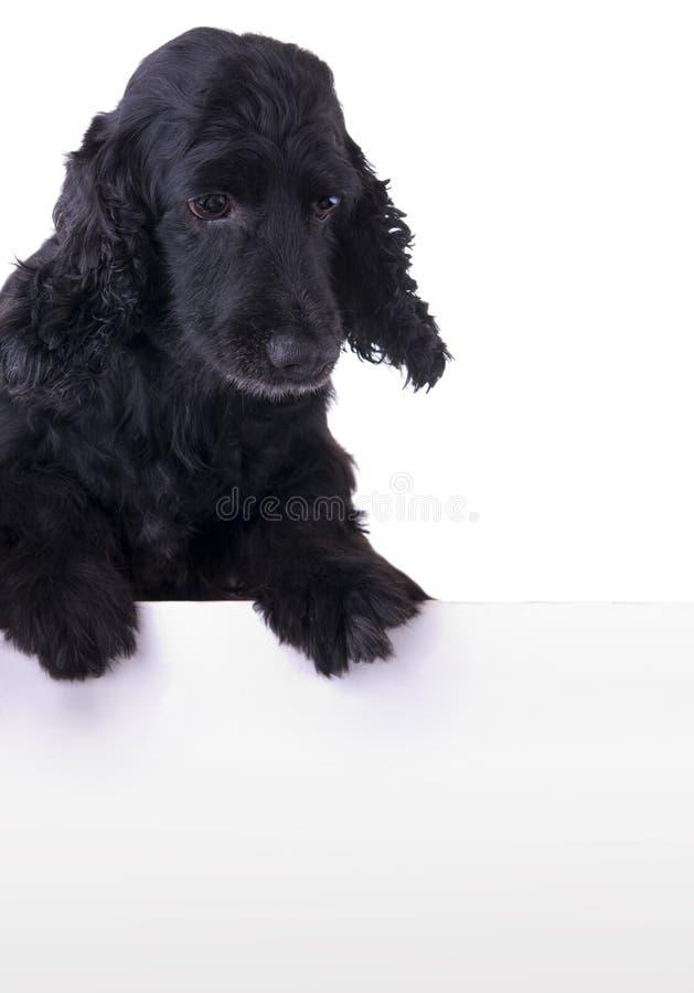 Cane affamato sopra la bandiera bianca fotografia stock libera da diritti