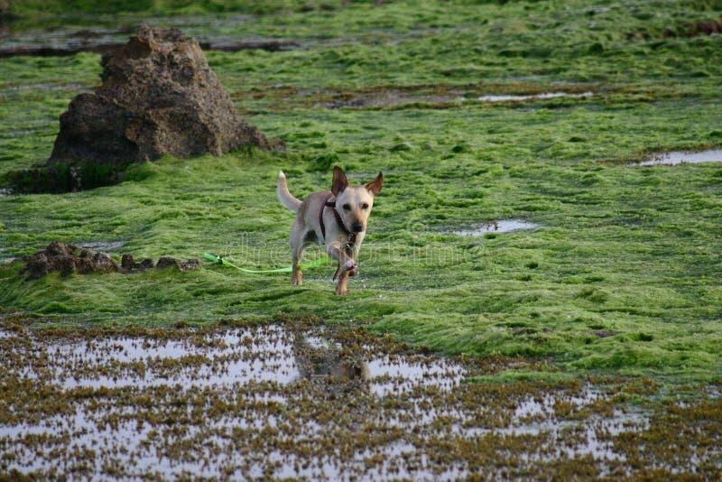 Cane al mare immagini stock