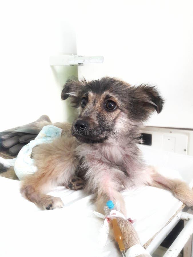 Cane al veterinario immagine stock