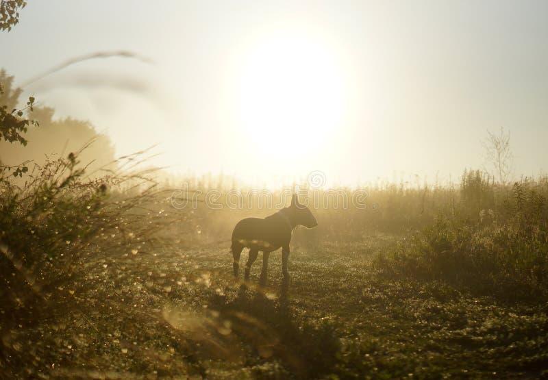Cane alla luce dell'alba fotografia stock libera da diritti